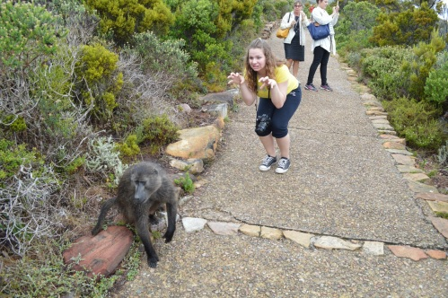 One of many baboon encounters