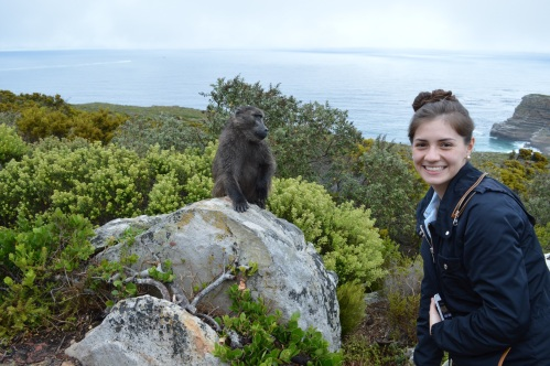 Baboon encounter!