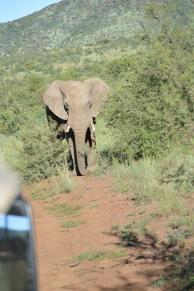 Elephant we saw on our safari