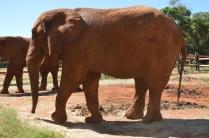 Elephant in the elephant sanctuary