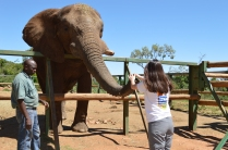Regina feeding the elephant